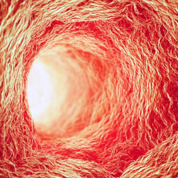 медицина, органы, 3D-печать, Исследователи успешно напечатали кровеносные сосуды