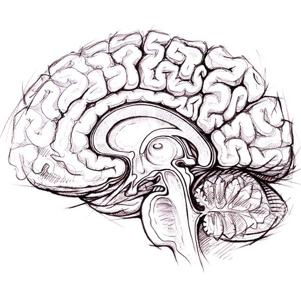 мозг,потенциал, Десять процентов и более